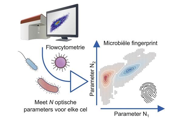 aq80-flowcytometrie-foto_2--visualisatie_van_de_fingerprinttechniek.jpg