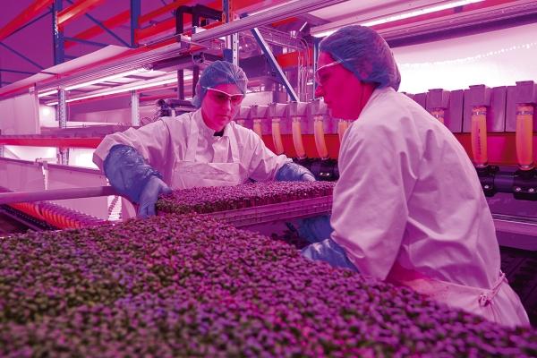 smartcropsproductie1114def.jpg