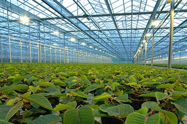 greenhousevlakwa.jpg